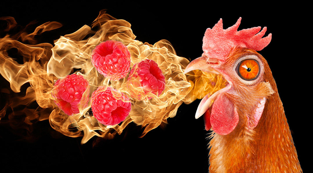 Chicken breathing flames and raspberries